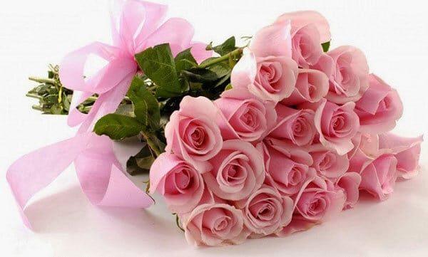 Những đóa hoa hồng