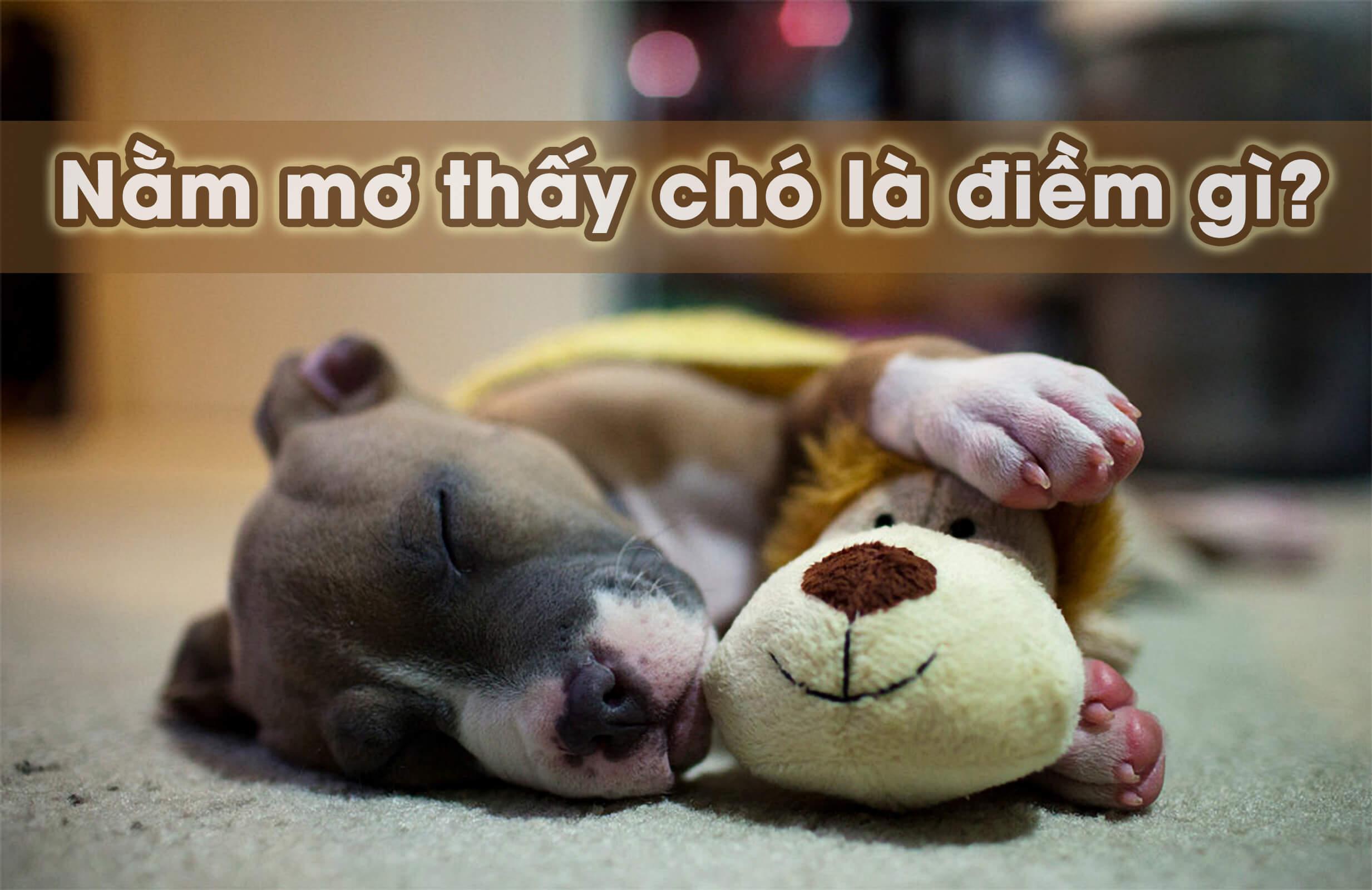 Ngủ mơ thấy chó báo hiệu điều gì?
