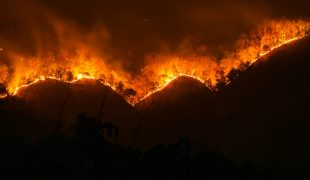 Mơ thấy lửa cháy rừng
