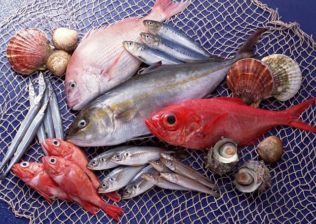 Cá béo là những loại cá mà trong các thớ mô và thành ruột có nhiều chất béo