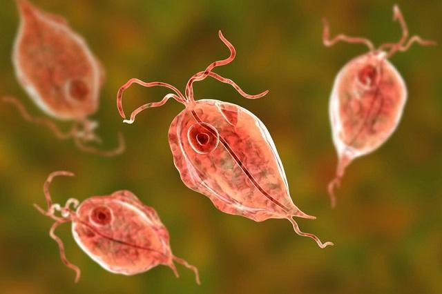 Do bị nhiễm khuẩn Trichomonas