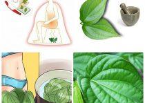 Nhiều chị em sử dụng lá trầu không chữa bệnh phụ khoa tại nhà